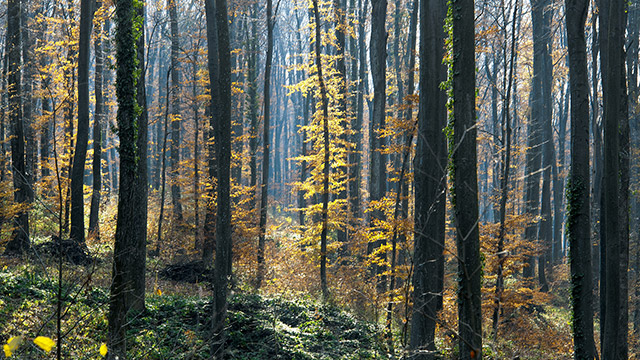 Forest on the hill of Croatian Bilogora in late Autumn by Boris Vargovic, free photo, wallpapers, images